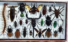 REAL RARE EXOTIC SPIDER SCORPION COLLECTION 22 BUG INSECT TAXIDERMY WOOD FRAME