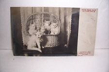 1905 VINTAGE RPPC REAL PHOTO POST CARD KITTEN CATS IN A BASKET COILA NY