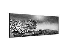 150x50cm Panoramabild Schwarz Weiss - Leopard liegend close-up Raubkatze