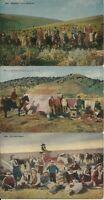 Cowboys, grub wagon etc., in cattle round-ups on 3 older mint color postcards