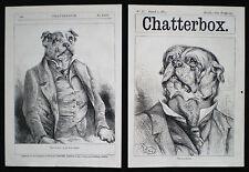 Animals Art Prints