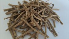 African Dream Root ( Silene capensis )