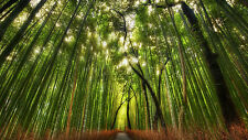 Framed Print - Path Running through a Japanese Bamboo Forest (Picture Poster Art
