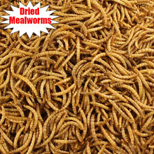 Lot Bulk Dried Mealworms for Wild Birds Food Blue Bird Chickens Hen Treats Food