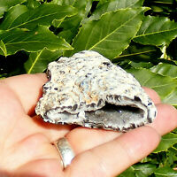 Feather Agate Geode Half with Quartz Crystal Lined Cavity 63g 5.5cm Polished