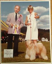 Tibetan Terrier 1979 Champion Dog Show 8 x 10 Photograph / Photo
