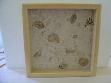 Handmade Art Sandblast Ocean Fossils  Lighted Display  Gift Curio Desk
