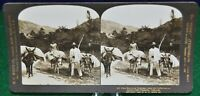 Antique Stereograph Card -Pack Burrows-Coffee, Venzuela, H.C. White - c.1904