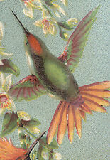 SHONEMAN BROs, 116, 118, & 120 N 8th St ~ PHILADELPHIA, PA  HUMMING BIRD  TTC818
