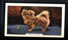 Gallaher Dogs 2nd Series 1938 - Tibetan Spaniel No. 15