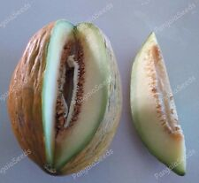 Cucumis melo 80+ Seeds Traditional Variety  Moylkeiko VERY TASTY Melon Fruit