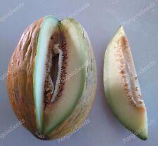 Cucumis melo 80+ Seeds Traditional Variety  Moylkeiko TASTY Melon Fruit