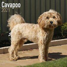 Cavapoo Calendar 2021 Premium Dog Breed Calendars