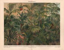Blattpflanzen I Philodendron Phoenix Howea Dracaena Cocos  Lithographie 1905