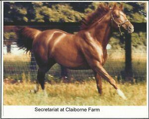 """1973 - SECRETARIAT romping in the pasture at Clairborne Farm - Color - 10"""" x 8"""""""