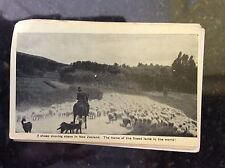 b1c postcard unused new zealand lamb and mountains sheep drovers