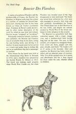 """The Bouvier des Flandres - Vintage Dog Art Print - Matted """"G"""""""