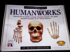 "HUMANWORKS 18"" HUMAN SKELETON MODEL KIT in ORIGINAL BOX, CAST, PAINT, & ASSEMBLE"