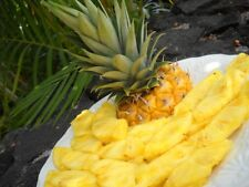 4 oz Candle Scent Oil-PINEAPPLE