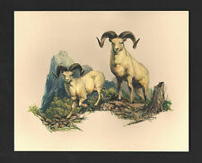*Vintage* 1970's FREDERICK SWENEY Wildlife 3-D EMBOSSED Print DALL SHEEP NOS