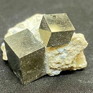 Pyrite in Marlstone-1.17