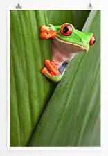 60x90cm Tierfotografie – Neugieriger Rotaugenlaubfrosch