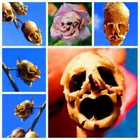 20/50 Stücke Garten Balkon Schöne Bonsai Pflanzen Death Rose Samen CHPH