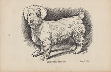 SEALYHAM TERRIER OLD 1915 ANTIQUE ENGRAVING PRINT PAGE
