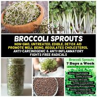 BROCCOLI SPROUTS 50g-2kg SEEDS NON-GM untreated BROCOLI SPROUT sprouting EDIBLE