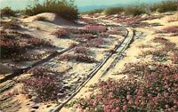 Chrome Postcard CA N287 Purple San Verbenas Blooming Curteichcolor Mojave Desert