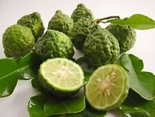 10 Thai Kaffir Lime Seeds, Organic, Fresh,Grow your own leaves, CITRUS HYSTRIX