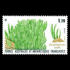 TAAF 1988 - Plants of the Antarctic Flora - Sc 133 MNH