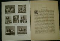 Blenheim Spaniel Breed History & Photos from the 1906 Dog Book by James Watson