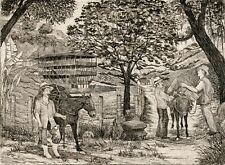 COFFEE BEANS CAFE Original Limited Edition Engraving Print South America Donkey