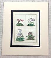 Antico Botanico Stampa Timo Viola Bell Fiore Maund Botanico Giardino Incisione