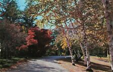 Postcard Winding Road Black Forest Trading Post Ulysses PA