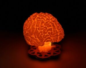 Human Brain - 3D Printed Accent Lamp