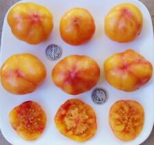 Big Rainbow - 40 Seeds - Fresh From 2020 - Buy any 3 varieties, get 1 free!