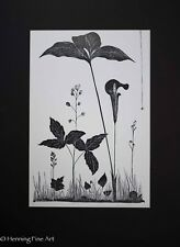 "Artist Signed Lithograph of Flowers and Insects, Monotone ""G. Foster"", Nice"