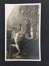 Vintage Postcard: Real Photo: Anonymous Cat Outside House: #A32