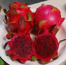 500 Graines  Hylocereus Undatus Pitaya DRAGON FRUIT Red Flesh seeds