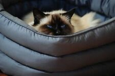 Cat Cotton Beds with Self Heating