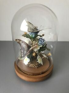 Real Butterflies Glass Dome Slight Damage To 1 Taxidermy