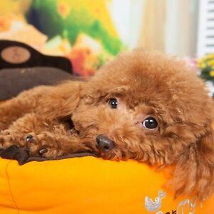 Warm Soft Short Plush Removable Pet Dog Bed Pillow