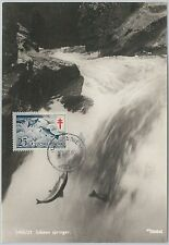 52205 - FINLAND -  MAXIMUM CARD - 1956  ANIMALS:  FISH