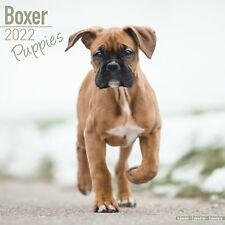 Boxer Puppies Calendar Calendar 2022 Dog Breed Wall PUPPY 15% OFF MULTI ORDERS!