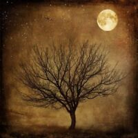 ZWPT764 fine night landscape tree moon hand-painted oil painting art Canvas