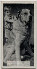 Saint Bernard Dog With Young Child 1930s Ad Trade Card