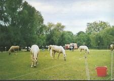 Horses - Palamino Circus Horses on Hampstead Heath - postcard c.1980s