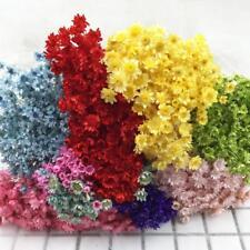 1 Bund Daisy Blumen Natürliche Getrocknete Blume Seltene Diy Fl Dekor